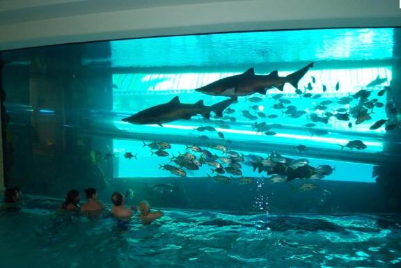 Vegas Hotel With Slide Through Shark Tank