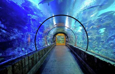 Mandalay Bay's Shark Reef Aquarium