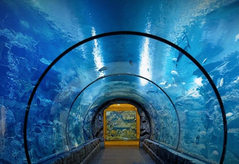 Shark Reef Aquarium