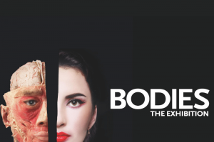 Bodies: The Exhibition at Luxor